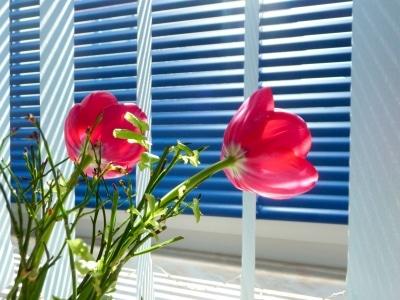 Jalousie am Fenster © Verena N. PIXELIO www.pixelio.de